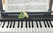 ピアノ(個人レッスン) ピアノ&キーボード(グループレッスン)